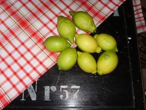 Die Zitronen meines Bäumchens